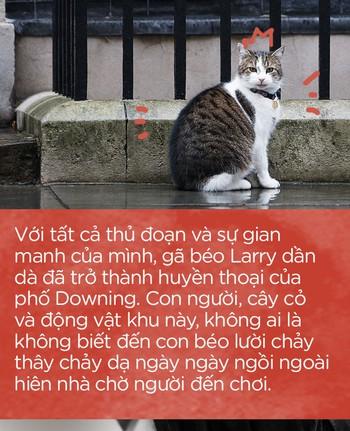 Một thập kỷ trong phủ Thủ tướng của con mèo béo vô dụng nhưng quyền lực nhất nước Anh - Ảnh 10.