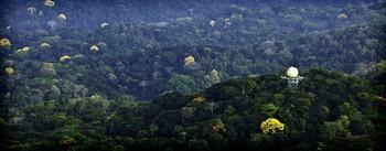 Không ngờ biến đổi khí hậu lại khiến rừng nhiệt đới này nở hoa - Ảnh 3.