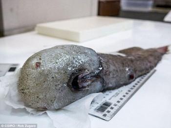 Phát hiện 5 loài sinh vật biển có ngoại hình kỳ dị tưởng chừng chúng không thuộc về hành tinh này - Ảnh 1.