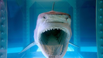 Tại sao cá mập luôn là nỗi khiếp sợ, dù chúng ta giết tới hàng triệu con mỗi năm? - Ảnh 3.