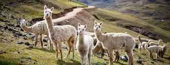 Quên Machu Picchu đông nghẹt đi, đất nước của Hoa hậu Hòa bình thế giới còn có cả vùng thung lũng linh thiêng chờ khai phá - Ảnh 2.