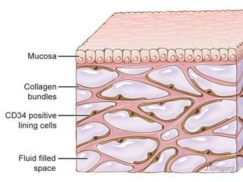 Phát hiện 1 bộ phận mới trên cơ thể con người - mở ra tiềm năng mới cho căn bệnh ung thư - Ảnh 2.