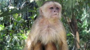 """Tranh cãi: loài khỉ đã """"đi bè"""" cưỡi sóng, vượt đại dương trước con người hàng triệu năm? - Ảnh 5."""