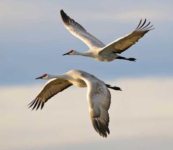 Lần đầu tiên trong lịch sử khoa học biết được làm thế nào loài chim nhìn thấy từ trường Trái đất - Ảnh 1.