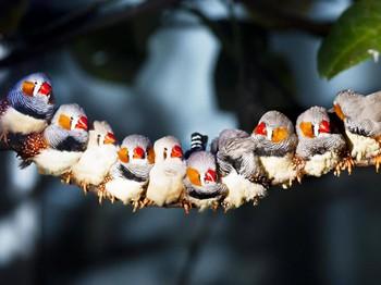 Lần đầu tiên trong lịch sử khoa học biết được làm thế nào loài chim nhìn thấy từ trường Trái đất - Ảnh 3.