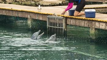 Sự thật đau lòng phía sau dịch vụ bơi cùng cá heo tại các thiên đường du lịch nhiệt đới - Ảnh 1.