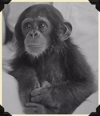 Thí nghiệm hãi hùng của nhà tâm lý học suýt biến con đẻ thành tinh tinh - Ảnh 2.