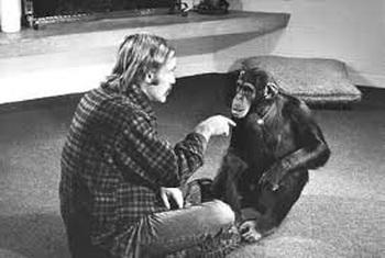Chuyện về Lucy - Cô tinh tinh được nuôi dạy như con người: Khi khoa học bỗng trở nên vô trách nhiệm và để lại một sinh vật cô đơn bậc nhất lịch sử - Ảnh 3.