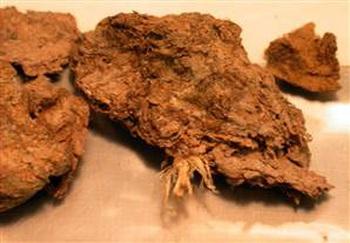 Bí mật được hé lộ từ... cục phân 14.000 năm tuổi: Cuối cùng một trong những bí ẩn lớn nhất của loài người đã được giải đáp - Ảnh 2.