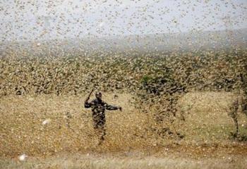 Hàng NGHÌN TỈ con châu chấu bay rợp trời: Đại dịch khủng khiếp chưa từng thấy, và đằng sau là thông điệp đáng sợ với toàn nhân loại - Ảnh 2.