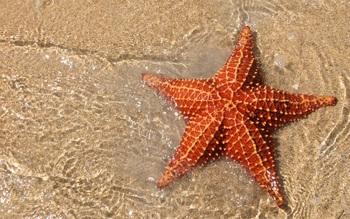 Đừng bao giờ check-in với thứ này khi đi biển Phú Quốc nếu bạn không muốn trở thành kẻ huỷ hoại nền sinh thái! - Ảnh 7.