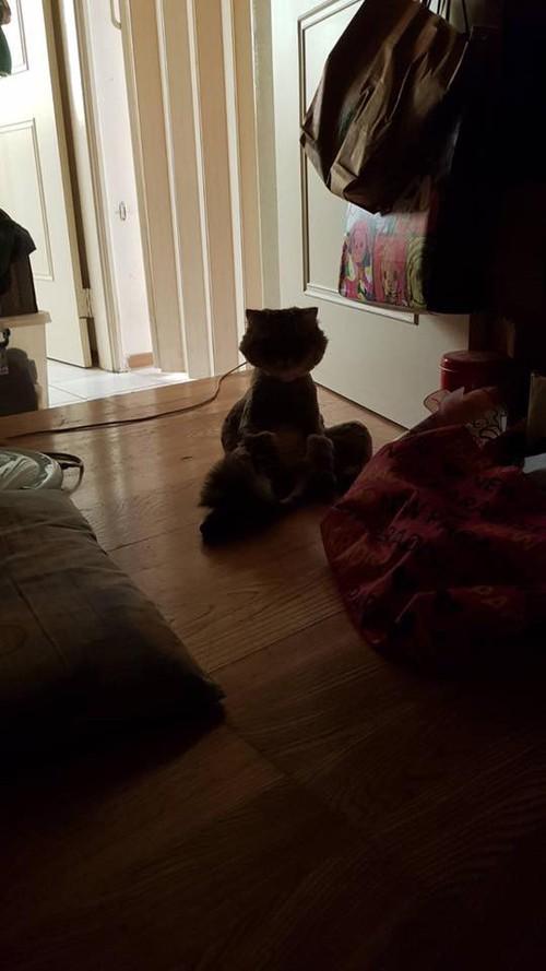 Chú mèo úp mặt vào tường, hờn dỗi cả thế giới vì bị cạo lông làm đẹp - Ảnh 5.