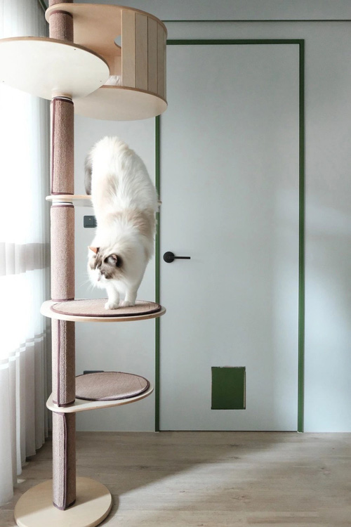 Mua căn hộ 66m2, cô gái design phòng khách không sofa cực xịn phục vụ boss mèo, nhiều sen sẽ muốn học hỏi đây - Ảnh 4.