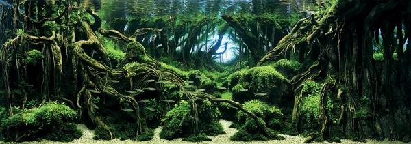 Các tác phẩm bể thủy sinh đỉnh cao thế giới - 1