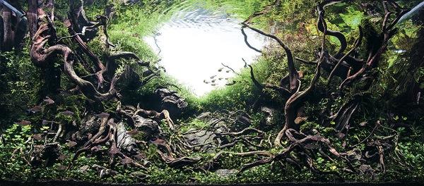 Các tác phẩm bể thủy sinh đỉnh cao thế giới - 11