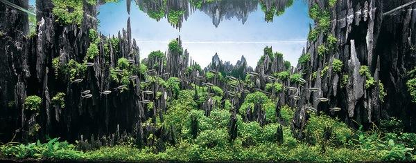Các tác phẩm bể thủy sinh đỉnh cao thế giới - 12