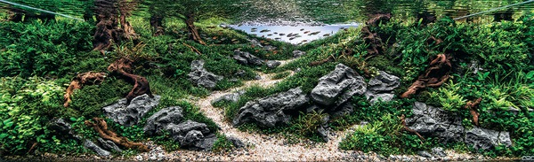 Các tác phẩm bể thủy sinh đỉnh cao thế giới - 3