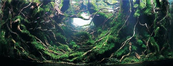 Các tác phẩm bể thủy sinh đỉnh cao thế giới - 4