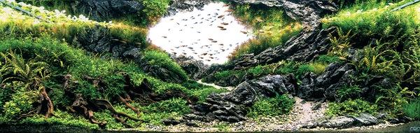 Các tác phẩm bể thủy sinh đỉnh cao thế giới - 6