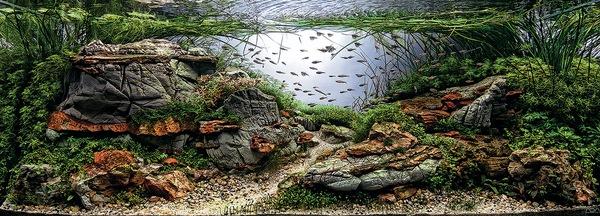 Các tác phẩm bể thủy sinh đỉnh cao thế giới - 7