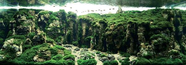 Các tác phẩm bể thủy sinh đỉnh cao thế giới - 8