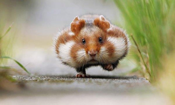 Giải mã giấc mơ nằm mơ thấy chuột