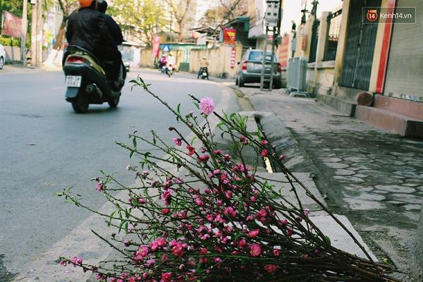 Image result for đào vứt sau Tết