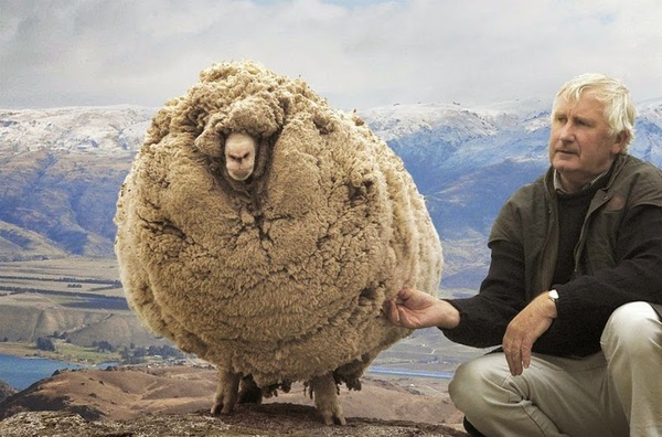 shrek-the-sheep-65-ac144