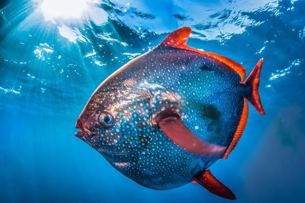 150918fish02-bb424