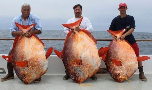 150918fish03-bb424