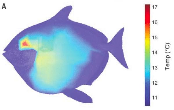 150918fish05-bb424