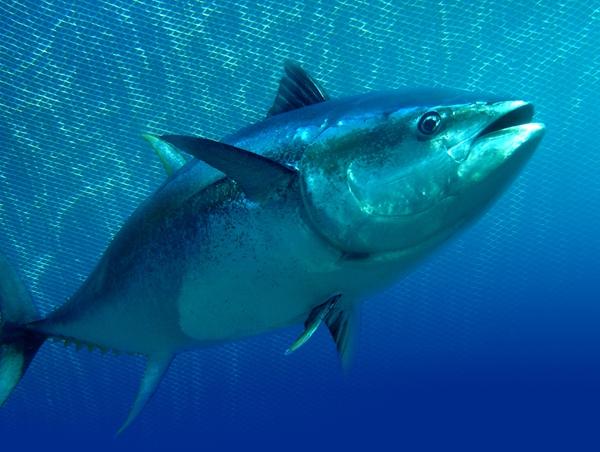150918fish07-941be