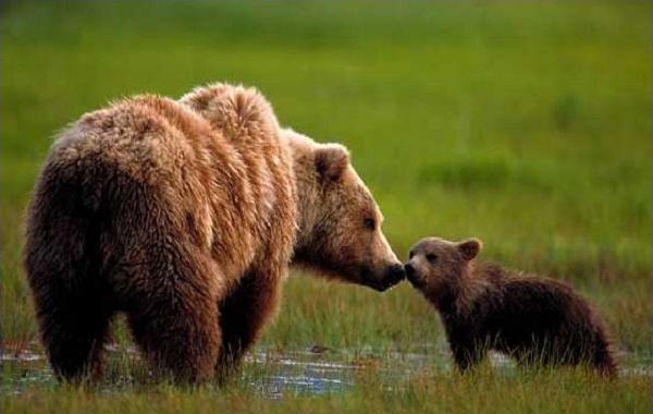 """Những """"ông bố"""" tồi nhất trong thế giới động vật 4"""