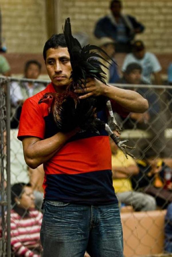 Chứng kiến cảnh chọi gà đẫm máu ở Peru 17