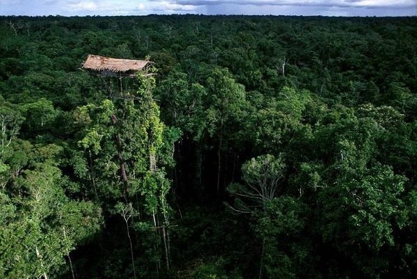 Bộ tộc sống trên cây duy nhất ở Trái đất 1