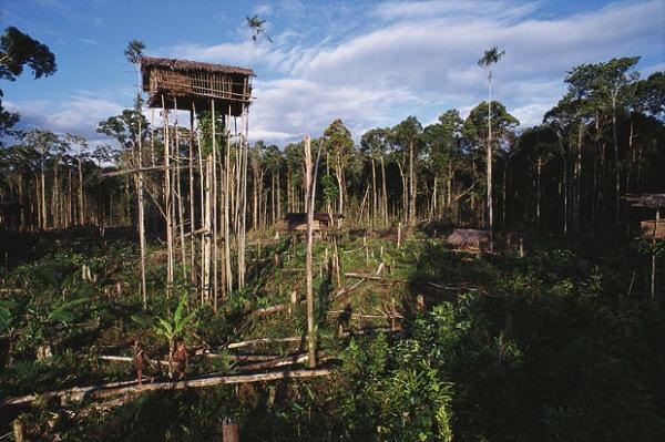 Bộ tộc sống trên cây duy nhất ở Trái đất 14