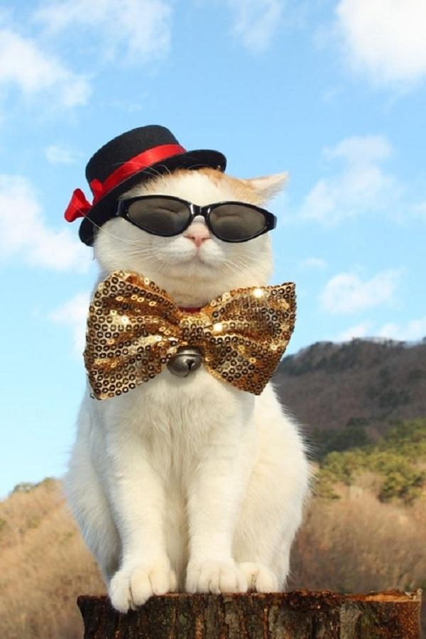 Hiểu tâm lý loài mèo qua tiếng kêu và hành động 1