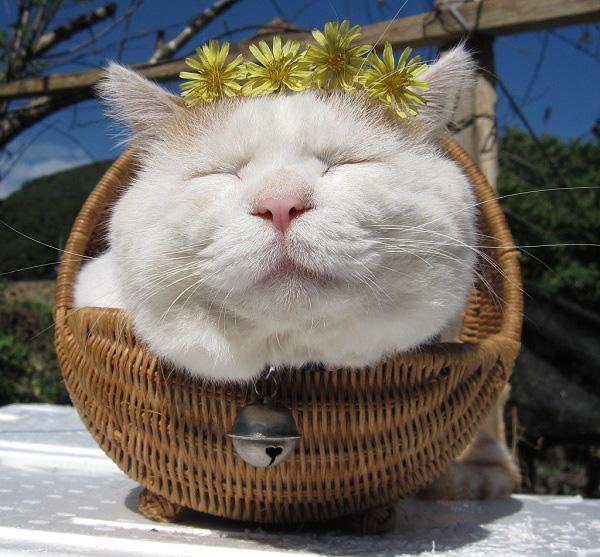 Hiểu tâm lý loài mèo qua tiếng kêu và hành động 2