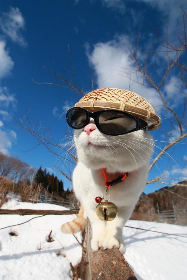 Hiểu tâm lý loài mèo qua tiếng kêu và hành động 12