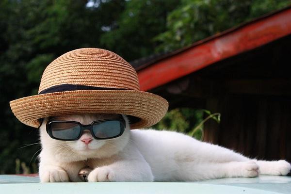 Hiểu tâm lý loài mèo qua tiếng kêu và hành động 9