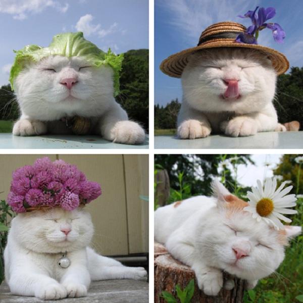 Hiểu tâm lý loài mèo qua tiếng kêu và hành động 13