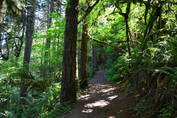 9 khu rừng bị ám kinh khủng nhất trên Trái đất 2