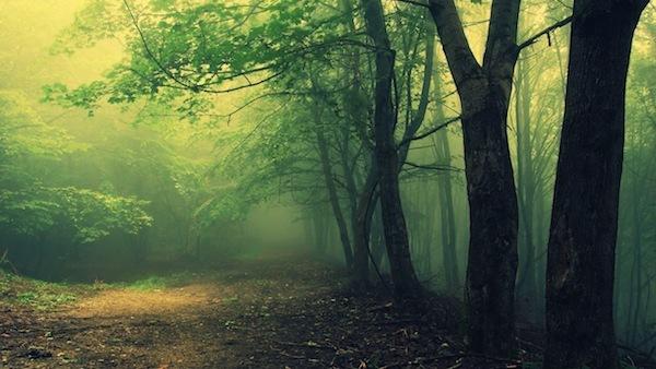 9 khu rừng bị ám kinh khủng nhất trên Trái đất 12