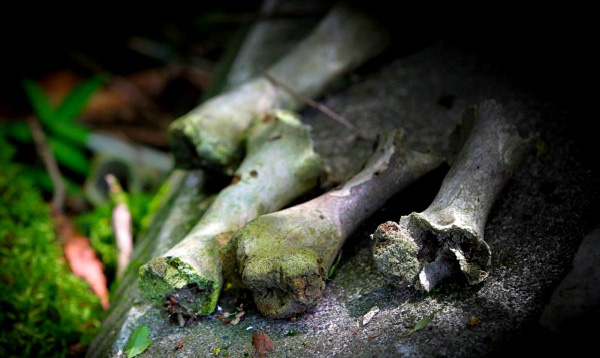 Giải mã bí ẩn lạnh gáy trong khu rừng tự sát 2