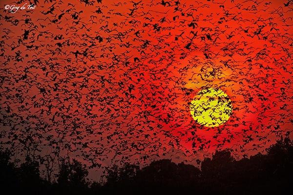 bats-1f6eb.jpg