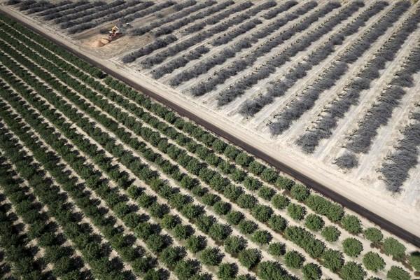Chùm Ảnh: Tình Hình Hạn Hán Nghiêm Trọng Nhất Trong 1.200 Năm Qua Tại  California