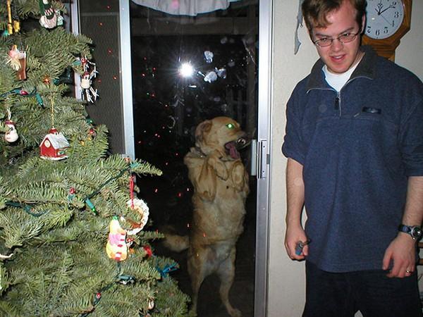 Chết cười với 20+ hình ảnh thú cưng năn nỉ xin được vào nhà - ảnh 13