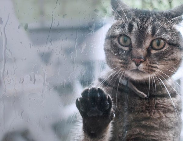 Chết cười với 20+ hình ảnh thú cưng năn nỉ xin được vào nhà - ảnh 19