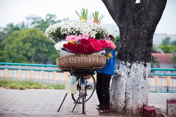 Ngỡ ngàng cúc họa mi đẹp tinh khôi trên phố Hà Nội 5