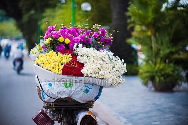 Ngỡ ngàng cúc họa mi đẹp tinh khôi trên phố Hà Nội 7